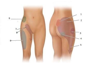 dureri de genunchi cu sciatica)